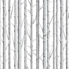 Woodland Silver Birch